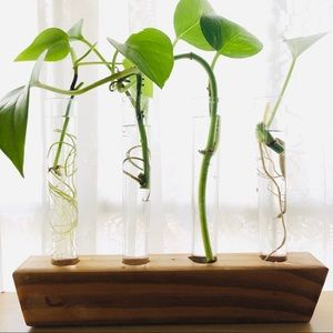 Other - SOLD Modern Propagation House Plant Hydroponic